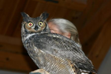 Eyes on Owls – Two Showings!