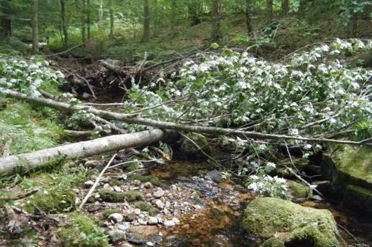 woodadditions